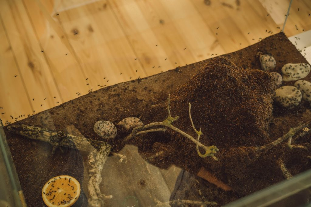 Skudras lielā akvārijā